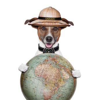 dog and globe