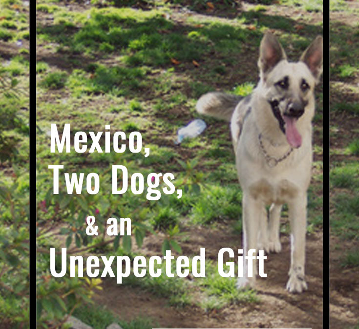 Mexico, Two Dogs, and An Unexpected Gift