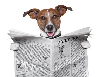 dog reading paper