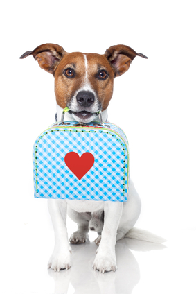 3 tips: dog with suitcase